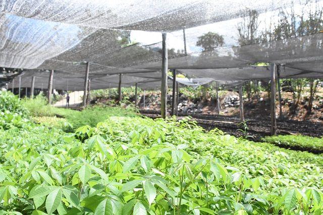 En el vivero municipal se producen 90mil platas forestales y de café