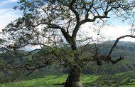 El árbol embrujado
