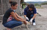 Campaña de vacunación canina y felina avanza en un 30%